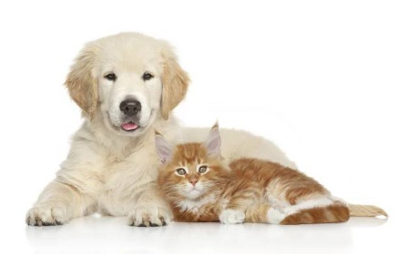 Očkoávní psů a koček